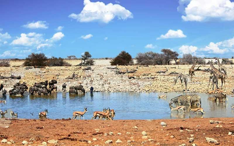 วิลเดอร์บีส อีกหนึ่งเจ้าป่าแอฟริกา