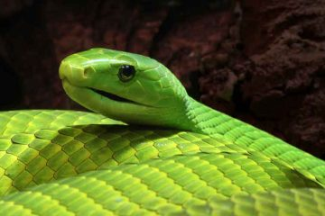Green-Mamba-news-site