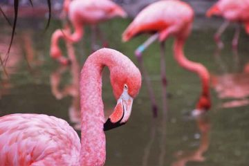 Flamingo-bird-news-site
