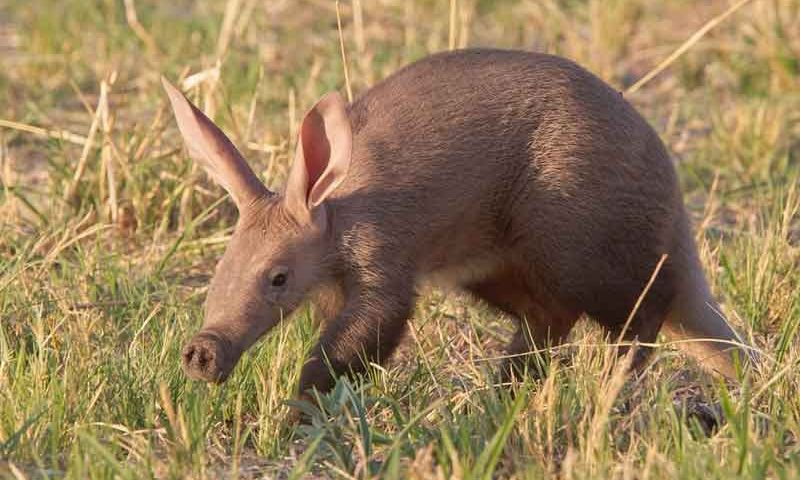Aardvark-review-news-site